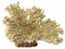 Blu 9132 bézs korall dísz