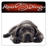 Red Dingo nyakörvek