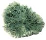 Blu 9137 nagy zöld korall dísz
