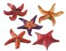 Blu 9158 kis tengeri csillag