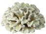Blu 9131 fehér korall dísz