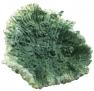 Blu 9135 kis zöld korall dísz
