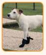 Ferplast kutyacipő, XL, 2db
